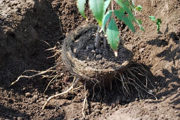 Coco-fibre pot