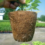 Great root penetration once planted